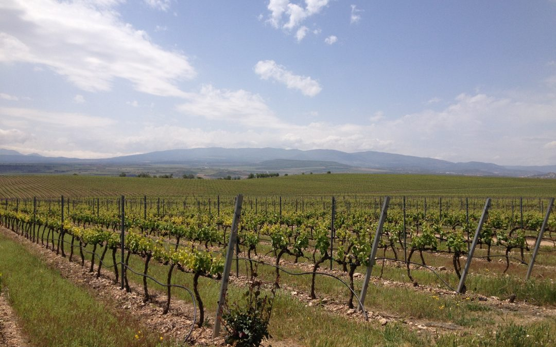 The 2017 vintage in Navarra and Rioja